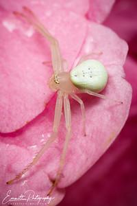 201307-White Spider-0001