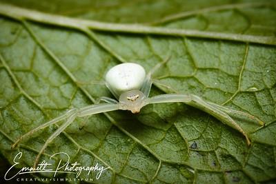 201307-White Spider-0004