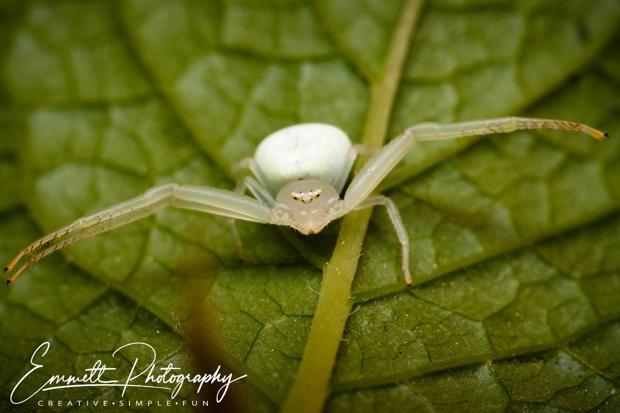 201307-White Spider-0003