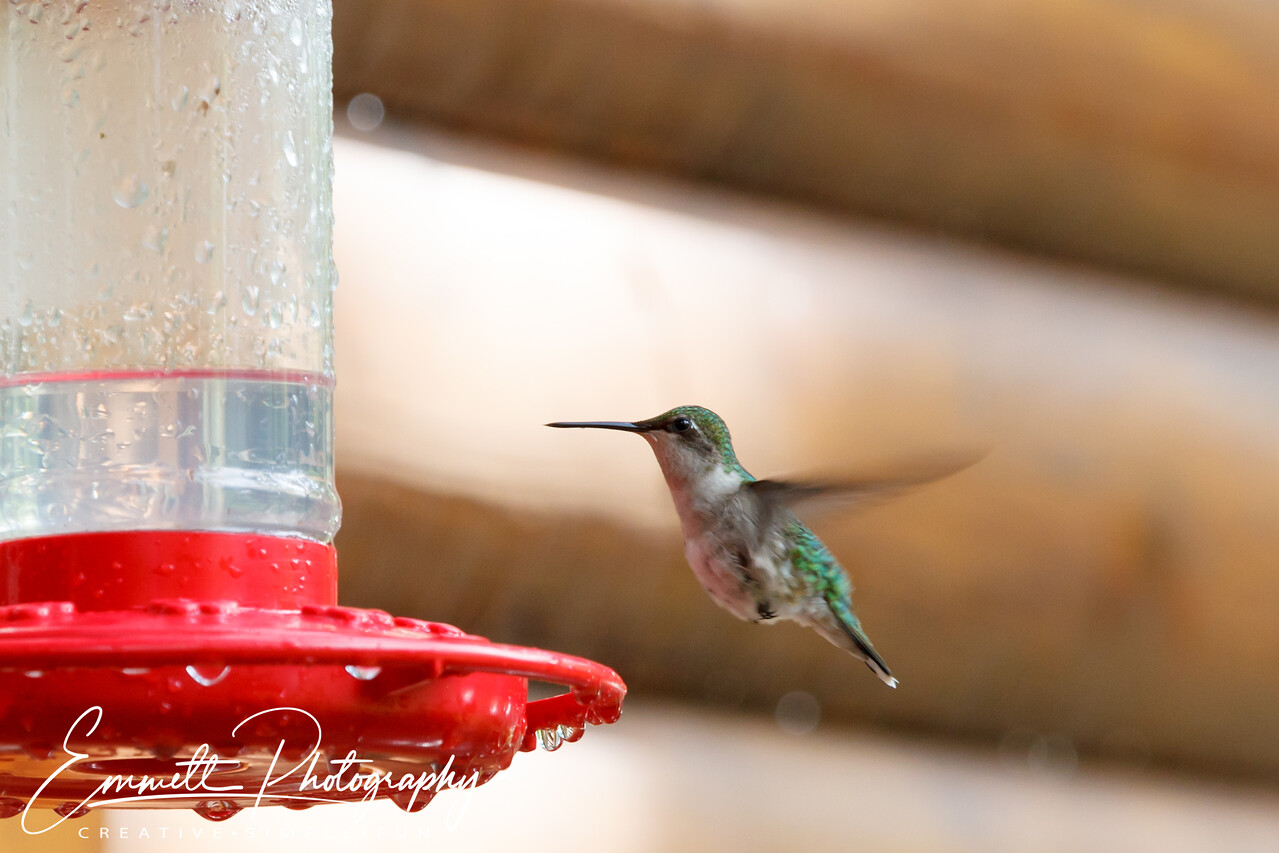 201306-Hummingbird-0024