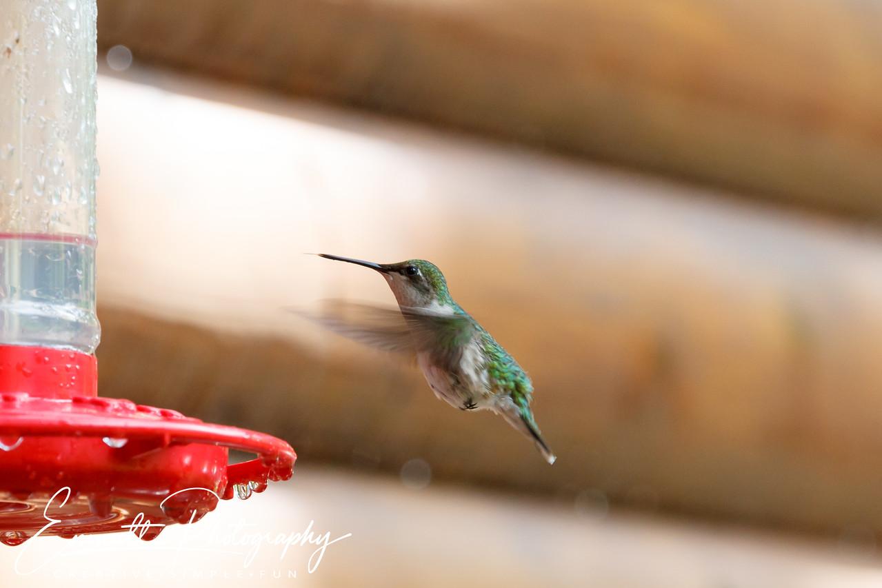 201306-Hummingbird-0028
