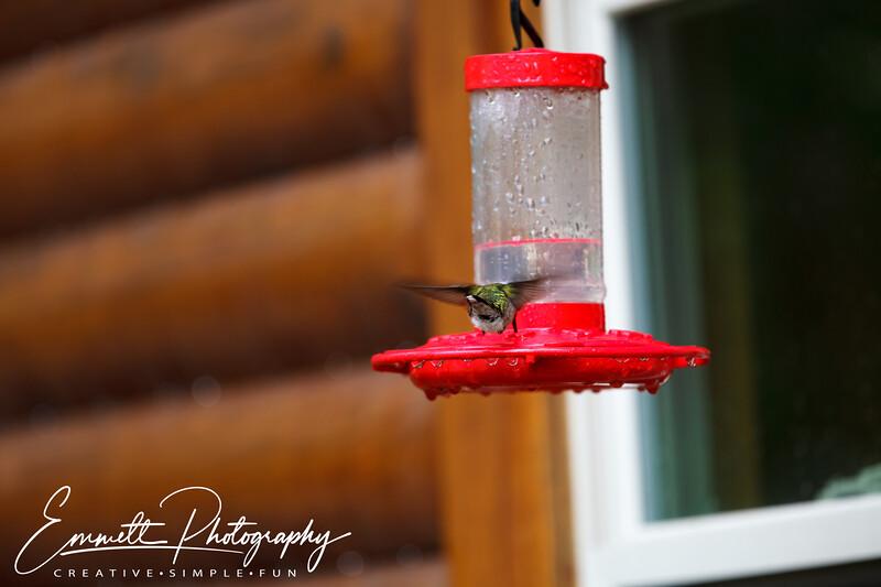 201306-Hummingbird-0017