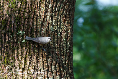 201306-Hummingbird-0041