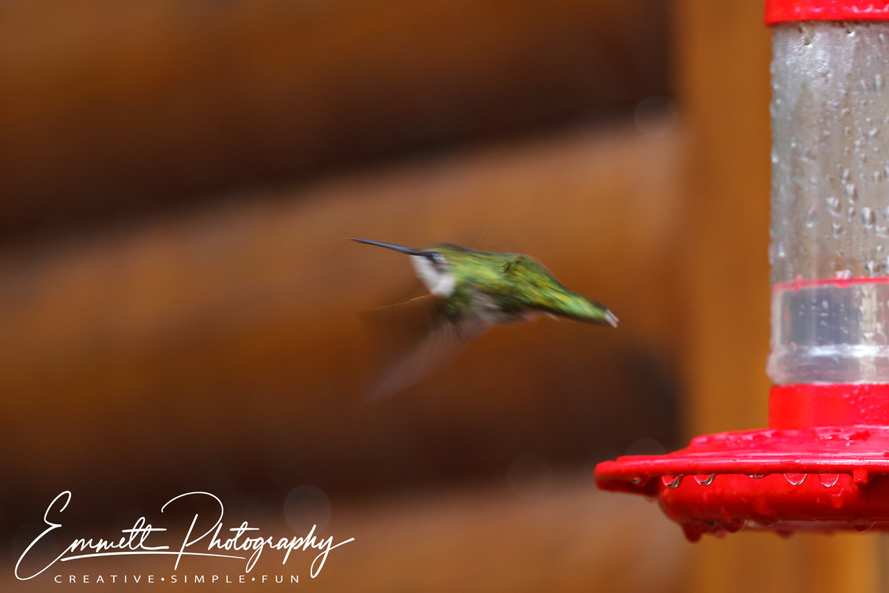 201306-Hummingbird-0019