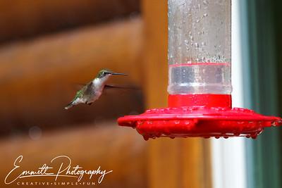 201306-Hummingbird-0011