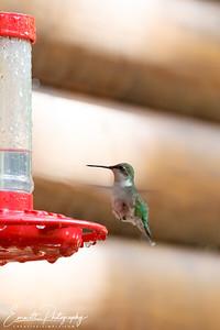 201306-Hummingbird-0026