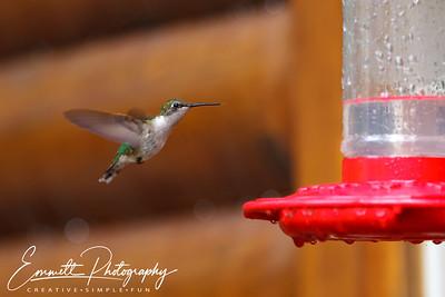201306-Hummingbird-0008