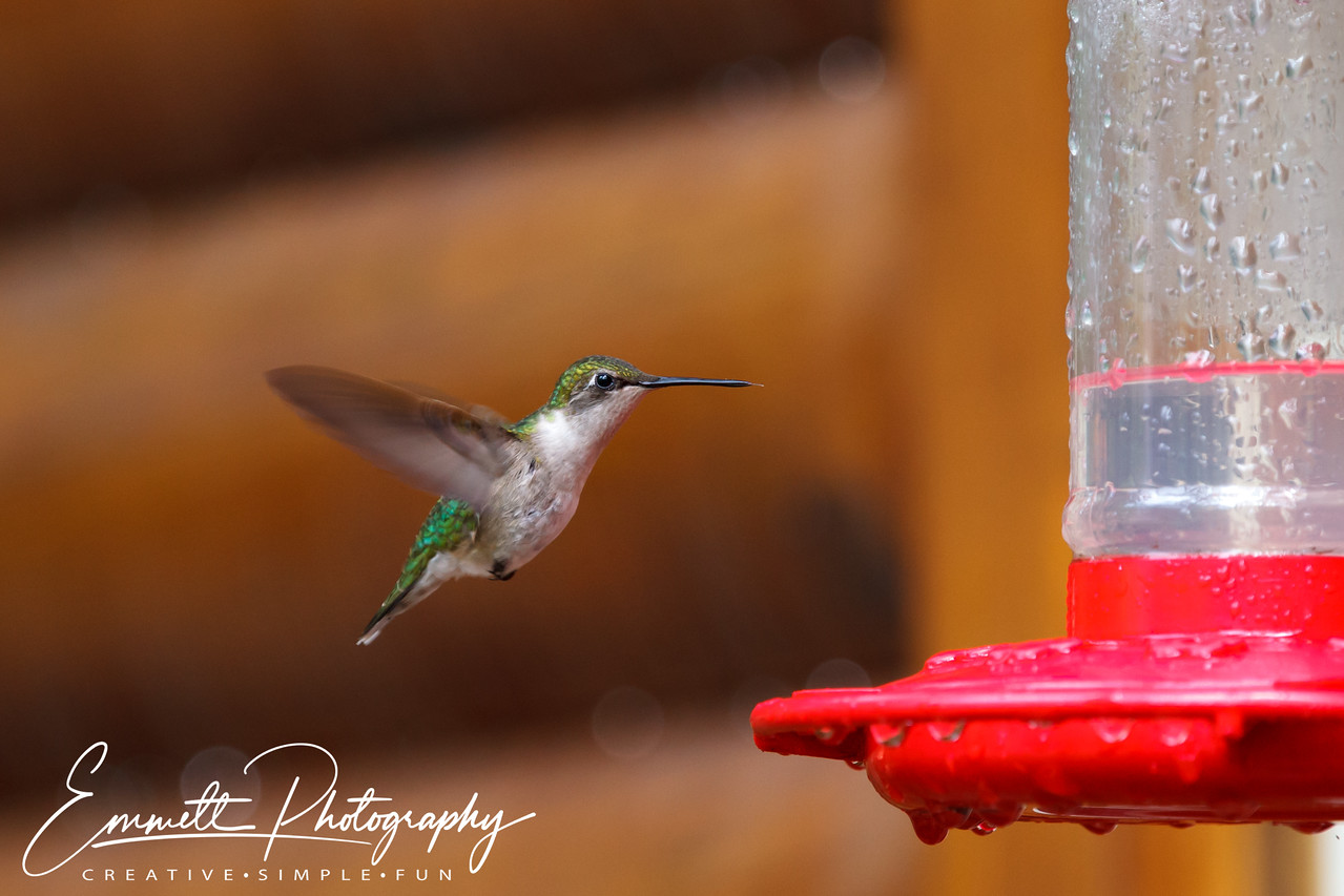 201306-Hummingbird-0013