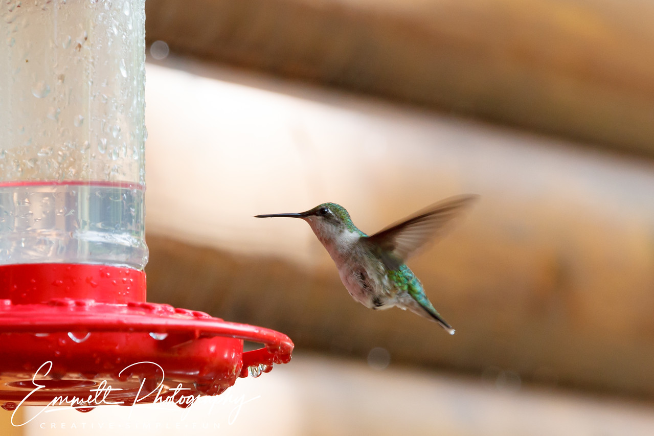 201306-Hummingbird-0025