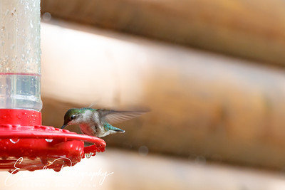 201306-Hummingbird-0030