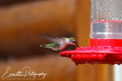 201306-Hummingbird-0010