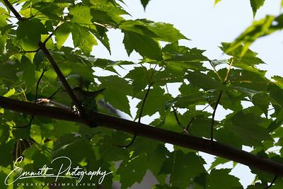 201306-Hummingbird-0034
