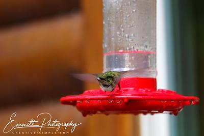 201306-Hummingbird-0016