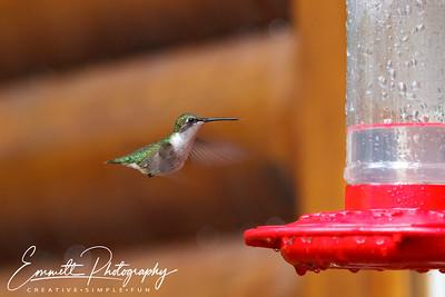 201306-Hummingbird-0009