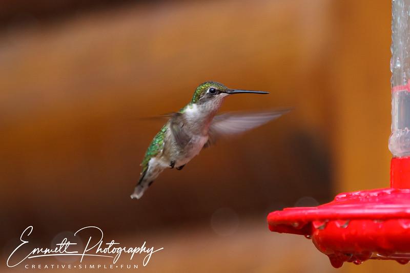 201306-Hummingbird-0012