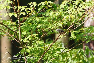 201306-Hummingbird-0042