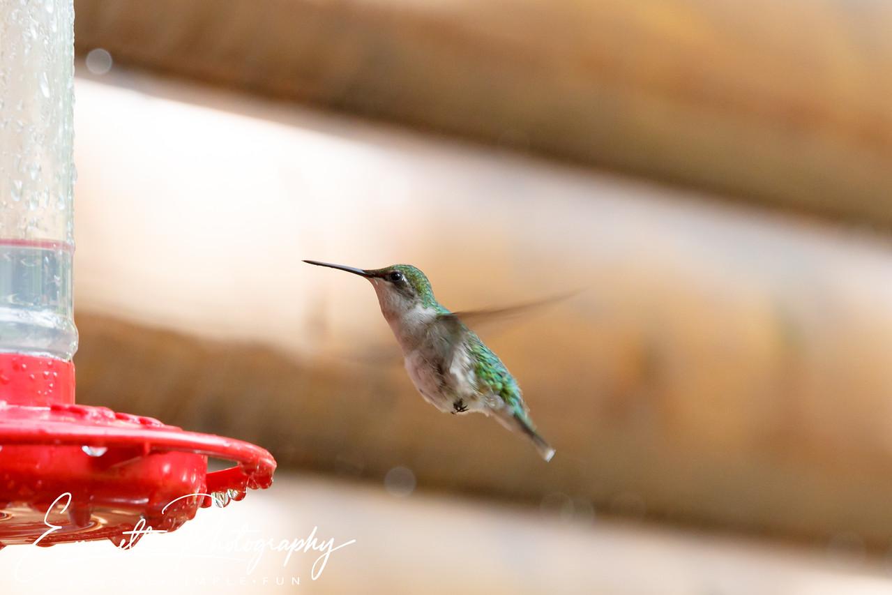 201306-Hummingbird-0029
