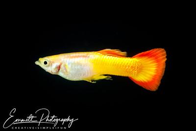 20200208-Fish-23