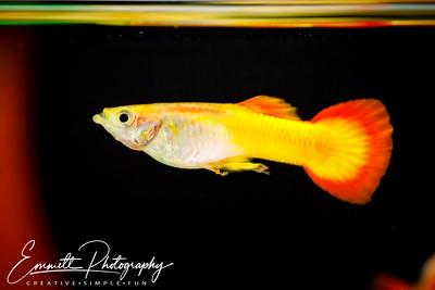 20200208-Fish-10