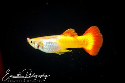 20200208-Fish-4