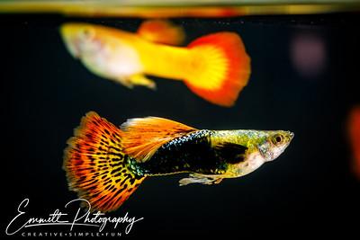 20200208-Fish-15