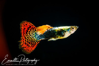20200208-Fish-18