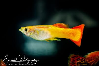 20200208-Fish-24