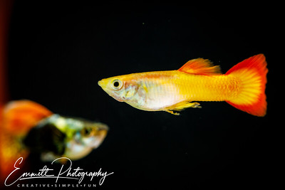 20200208-Fish-14