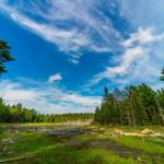 Eagle's Nest Trail swamp, portrait