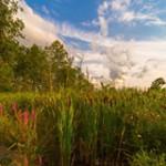 Ottowa Canada vegetation 1