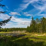Eagle's Nest Trail swamp, landscape