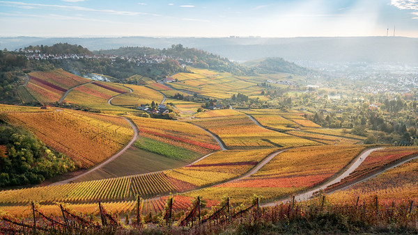 Vineyards in fall colors. Weinberge im Herbst