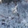 Winter2015-2