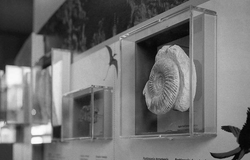 Joggins Fossil Cliffs museum