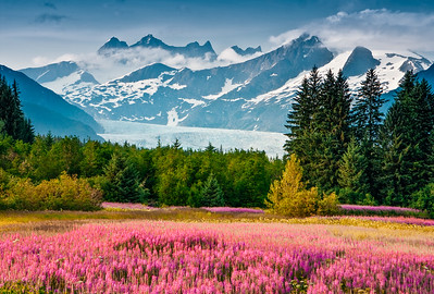 Mendenhall Glacier with blooming fireweed on a sunny summer day