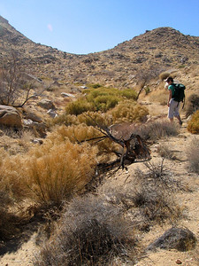 Leia scoping out the tamarisk...or so we thought
