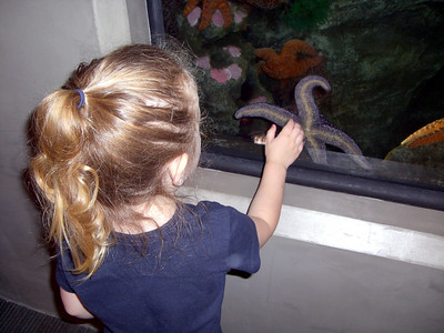 Looking at a starfish for the first time.