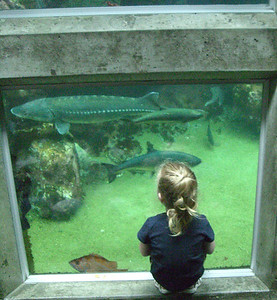 Enraptured by all of the fish swimming around us.