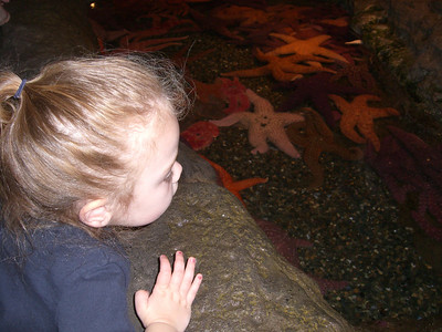 Getting up the nerve to touch the starfish in the open pool.