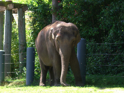 I overheard a handler say this elephant is 40 years old!