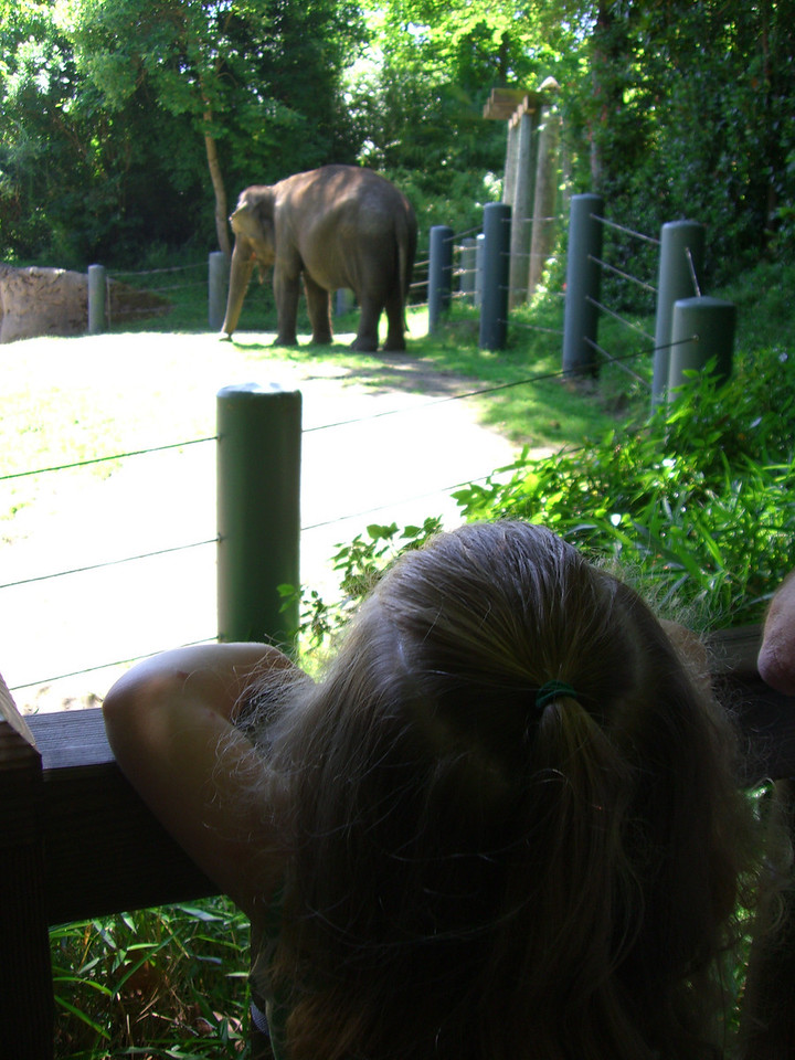 Watching the elephant. I overheard a handler say this elephant is 40 years old!