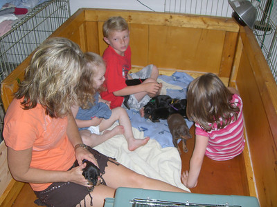 Kim and the kids playing with the puppies.