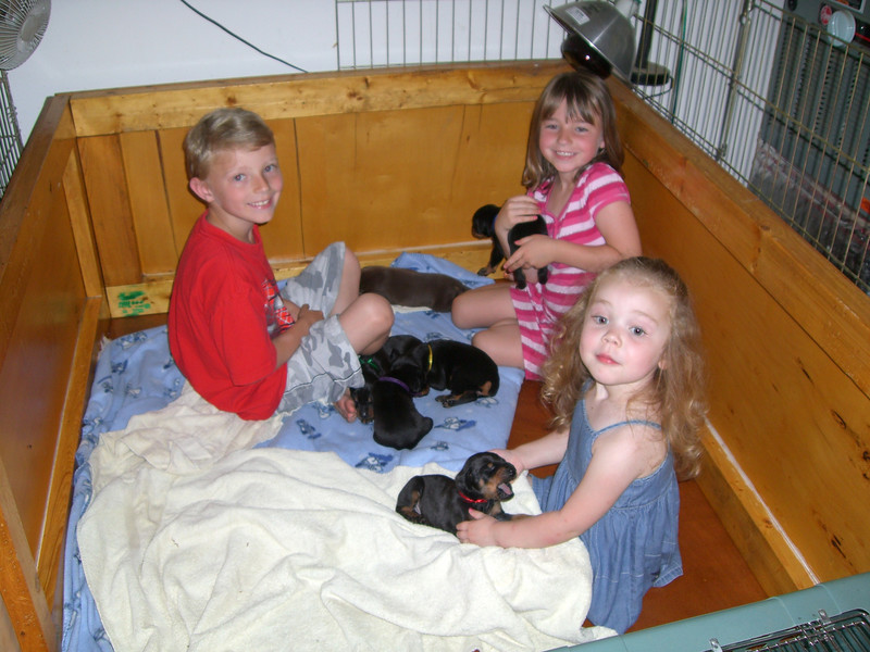 The kids playing with (aka: socializing) the puppies.