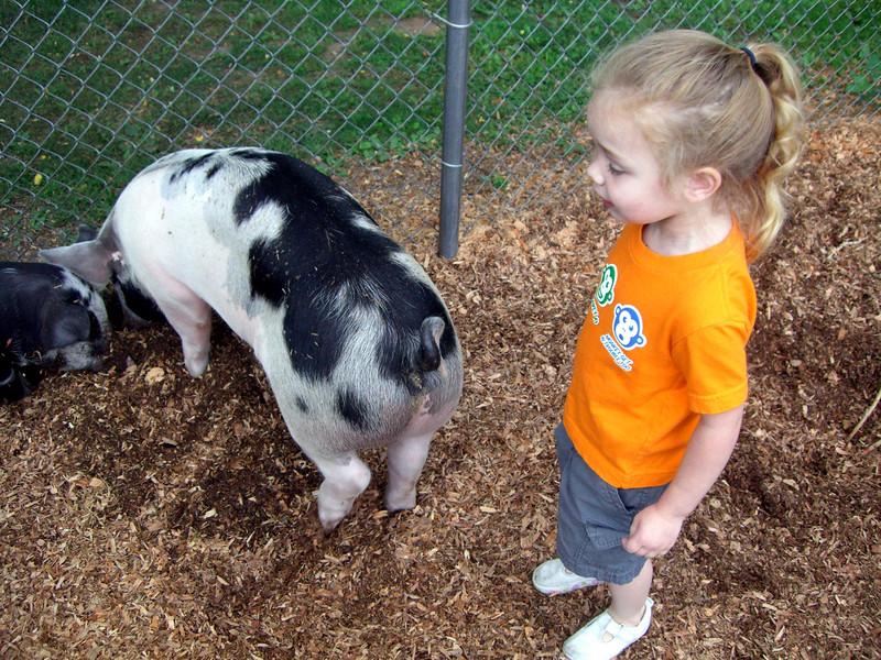 The pigs at the petting zoo in Jennings Park.