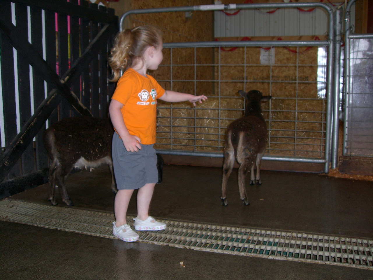 Chasing the goats around the petting zoo at Jennings Park.