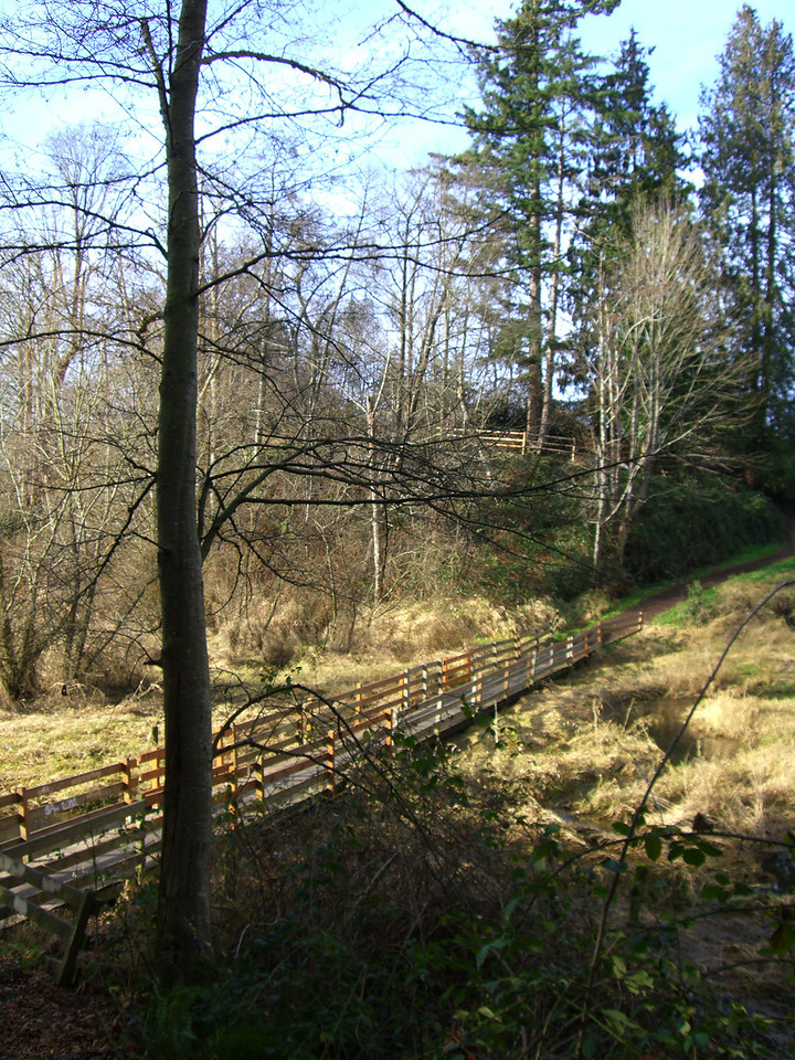 Bridge and trees in Jennings Park.