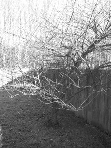 Tree in the backyard...just thought it was a cool photo.