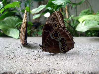 The butterfly room while visiting the Pacific Science Center.