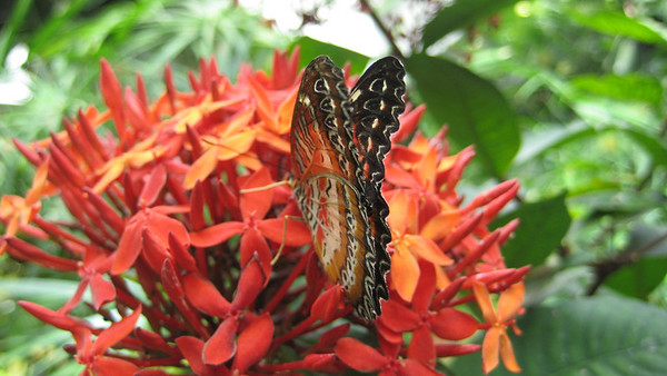 In the butterfly room (at the Pacific Science Center). Taken by Whitney.