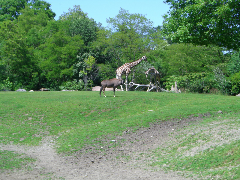 Zoo - Father's Day '08